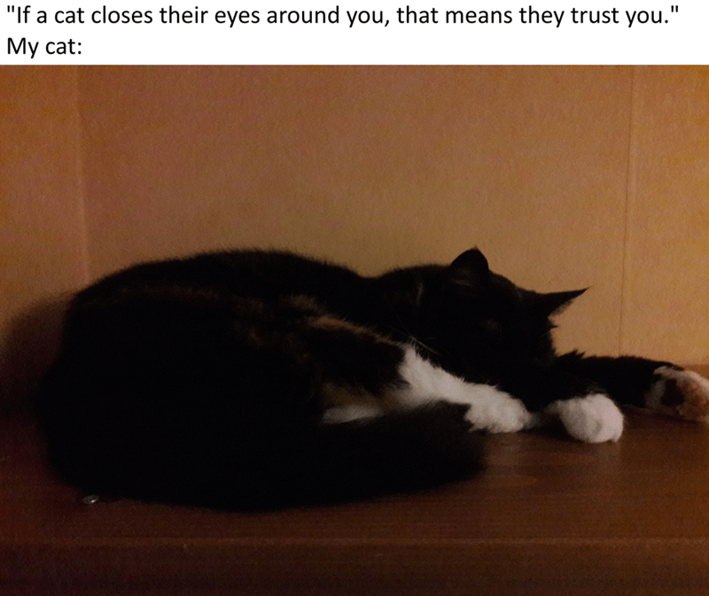 """Cat - """"If a cat closes their eyes around you, that means they trust you."""" My cat:"""