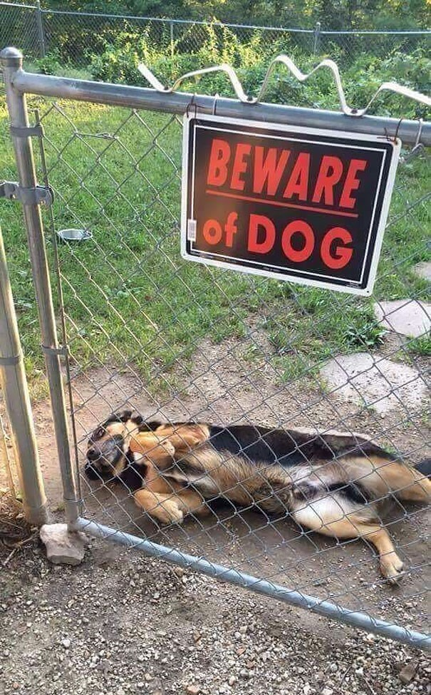 """Pic of a cute dog behind a fence with a sigh that reads, """"BEWARE of DOG"""""""