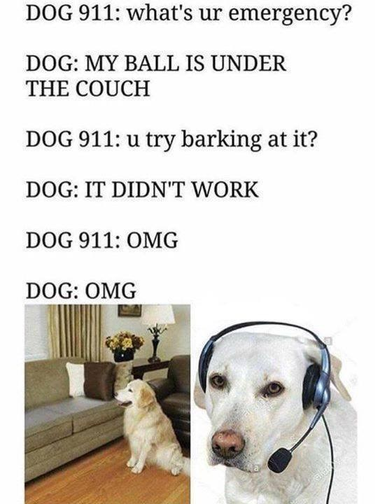 """Dog meme that reads, """"DOG 911: what's ur emergency? DOG: MY BALL IS UNDER THE COUCH; DOG 911: u try barking at it? DOG: IT DIDN'T WORK; DOG 911: OMG; DOG: OMG"""""""