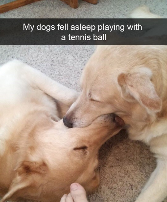 """Dog meme that reads, """"My dogs fell asleep playing with a tennis ball"""""""