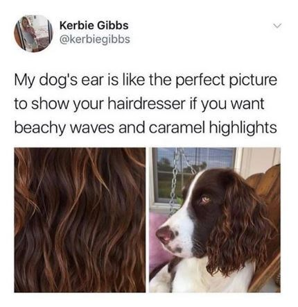 Dog - Kerbie Gibbs @kerbiegibbs My dog's ear is like the perfect picture to show your hairdresser if you want beachy waves and caramel highlights