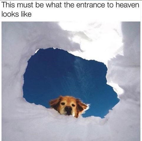 Dog - This must be what the entrance to heaven looks like