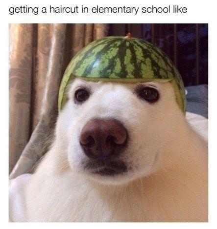 Dog - getting a haircut in elementary school like