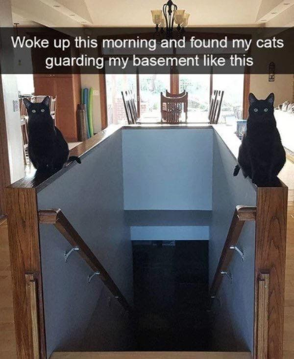 Cat - Woke up this morning and found my cats guarding my basement like this