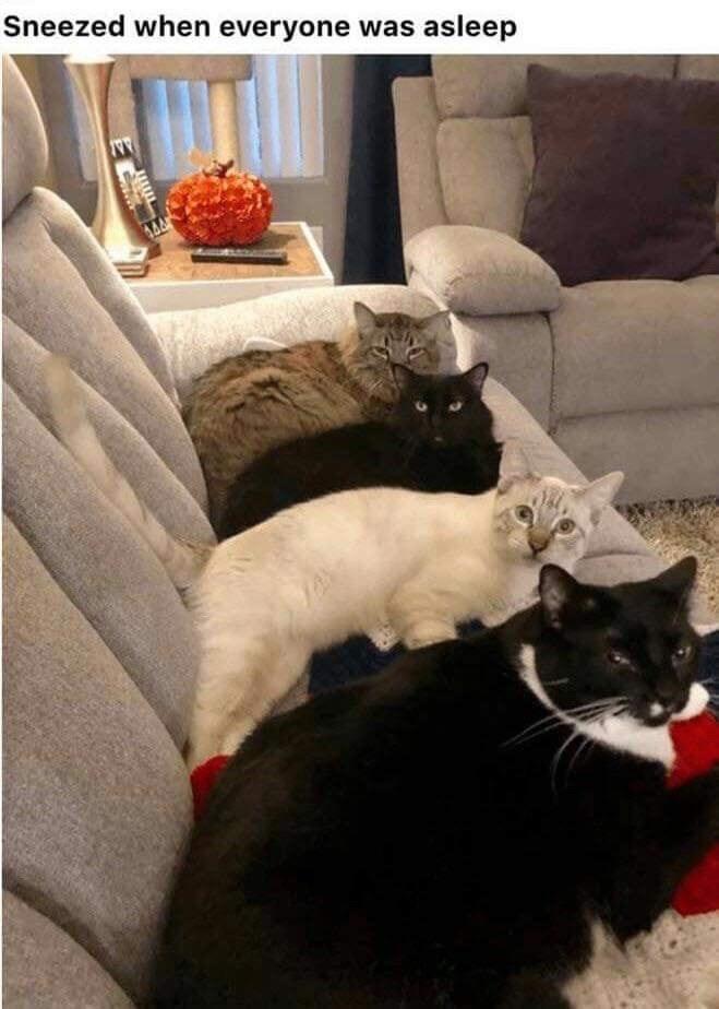 Cat - Sneezed when everyone was asleep