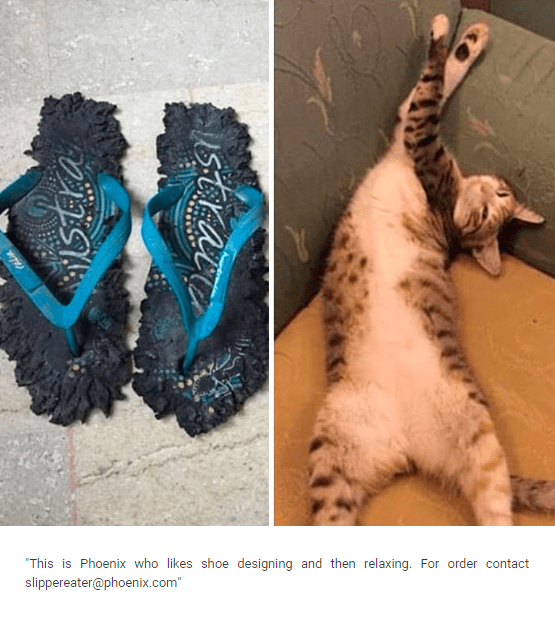 """Cat-shaming meme that reads, """"This is Phoenix who likes shoe designing and then relaxing. For order contact slippereater@phoenix.com"""""""