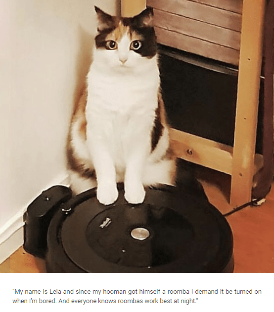 """Cat-shaming meme that reads, """"My name is Leia and since my hooman got himself a roomba I demand it be turned on when I'm bored. And everyone knows roombas work best at night."""""""