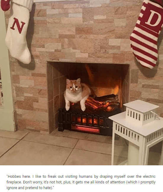 """Hearth - ED """"Hobbes here. I like to freak out visiting humans by draping myself over the electric fireplace. Don't worry, it's not hot, plus, it gets me all kinds of attention (which I promptly ignore and pretend to hate)."""""""