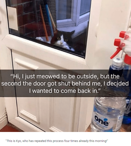 """Water - """"Hi, I just meowed to be outside, but the second the door got shut behind me, I decided I wanted to come back in."""" one """"This is Kyo, who has repeated this process four times already this morning!"""