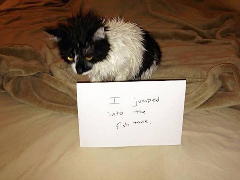 Cat - エ jonped into +he fsh tank