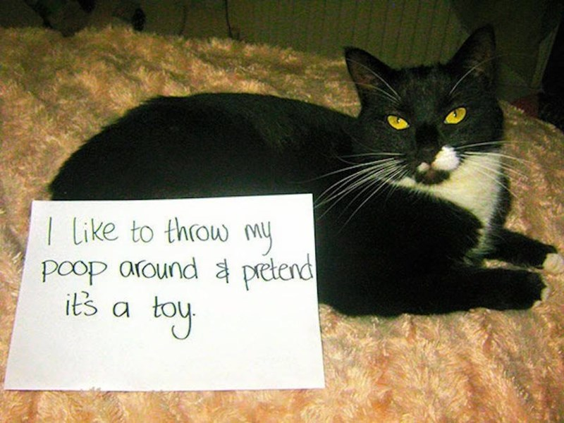Cat - I Like to throw my Poop around pretend its a toy