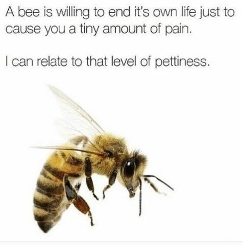 Bee - A bee is willing to end it's own life just to cause you a tiny amount of pain. I can relate to that level of pettiness.