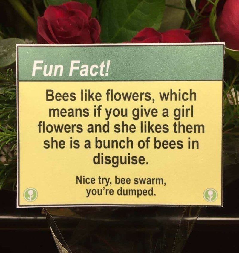 Text - Fun Fact! Bees like flowers, which means if you give a girl flowers and she likes them she is a bunch of bees in disguise. Nice try, bee swarm, you're dumped.