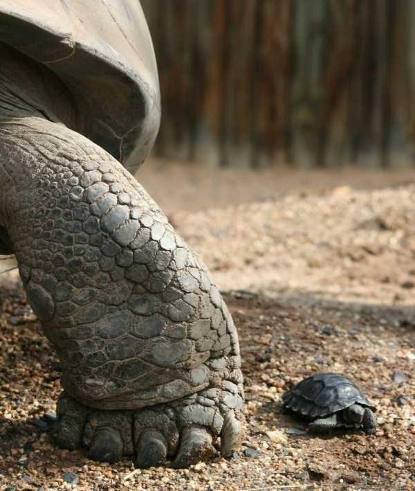 amazing animal photo - Tortoise