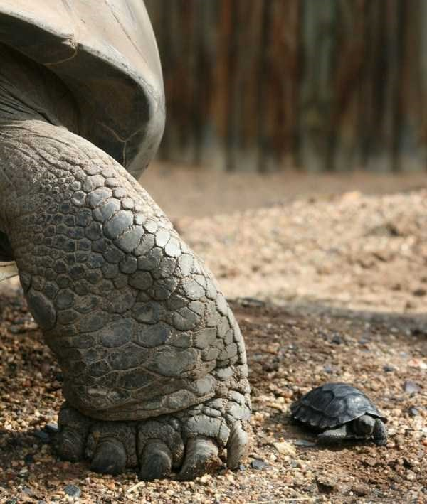 amazing animal photo - Tortoise