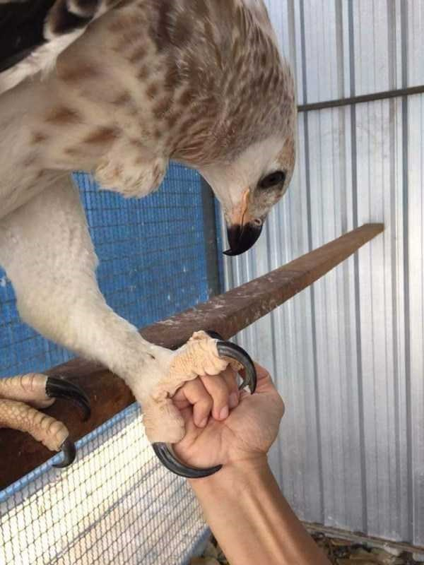 amazing animal photo - Bird