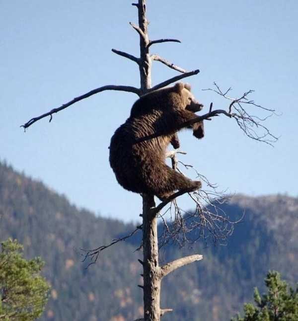 amazing animal photo - Wildlife