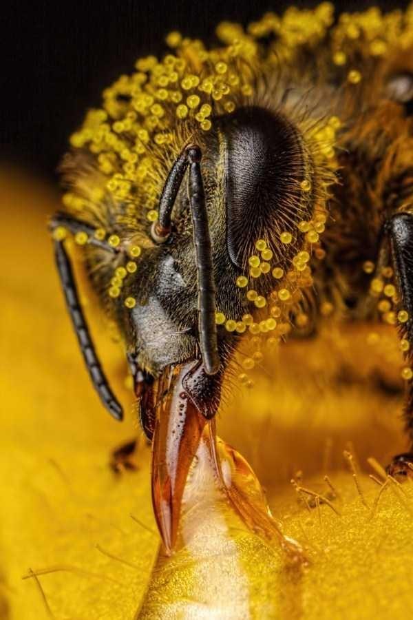 amazing animal photo - Honeybee