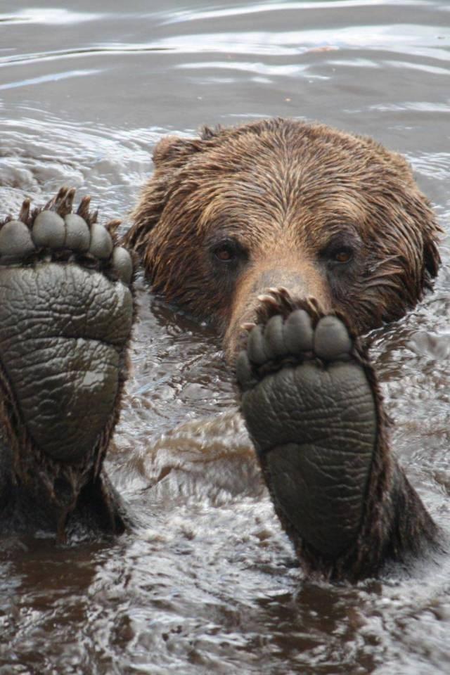 amazing animal photo - Brown bear