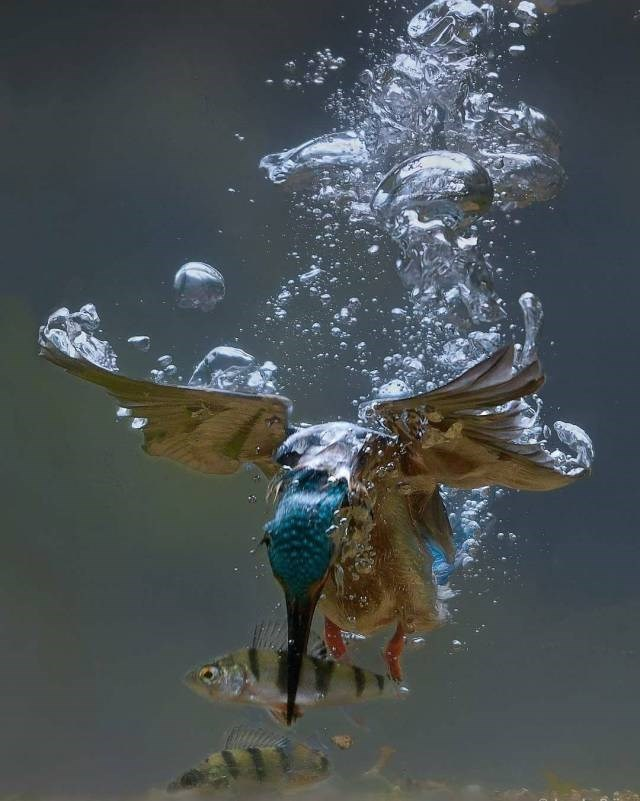 amazing animal photo - Water