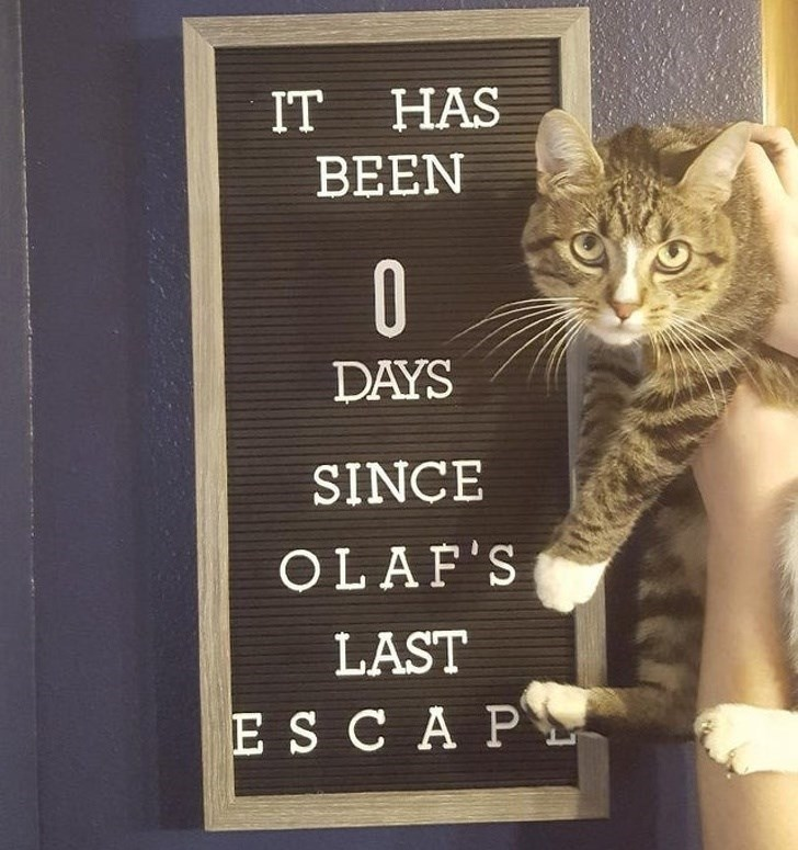 Cat - IT HAS BEEN DAYS SINCE OLAF'S LAST ES CA P