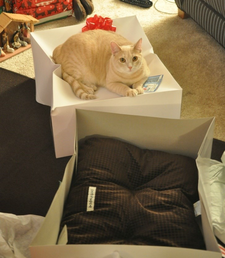 Cat - petsheppe