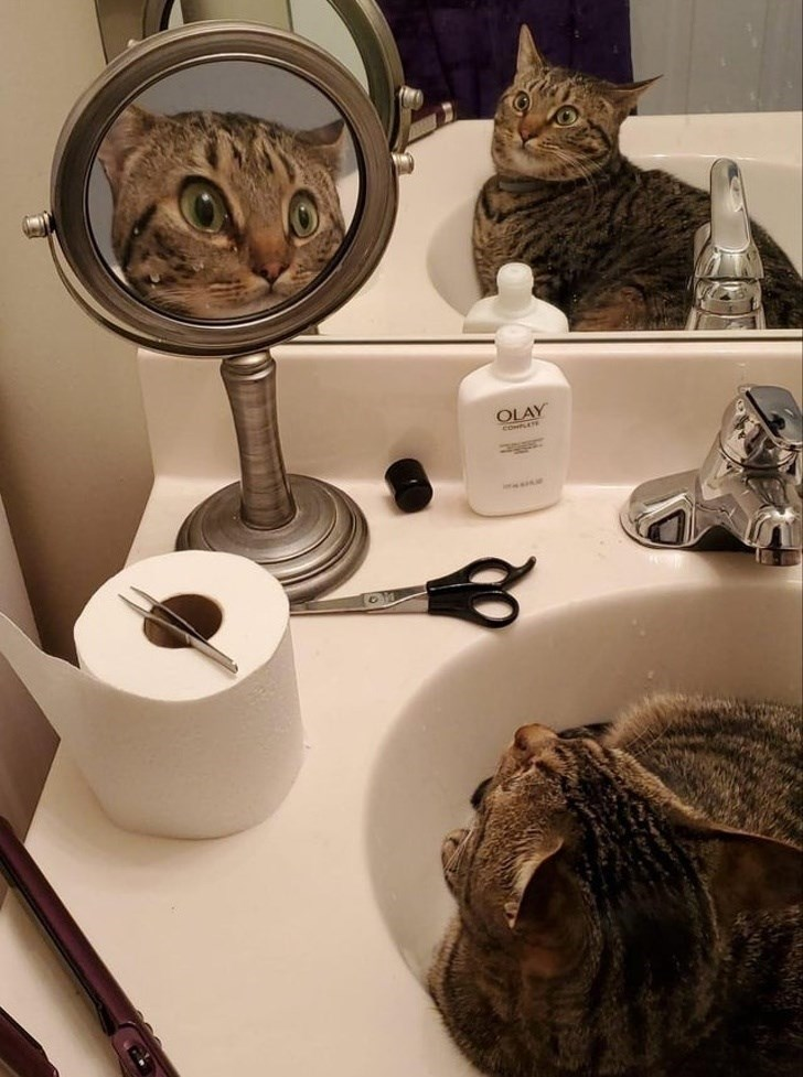Cat - OLAY
