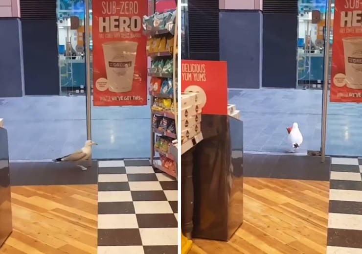 Floor - SUB SUB-ZERO HERO HE GOE GAE DELICIOUS YUM YUMS EVE ARWEVE GOT THes