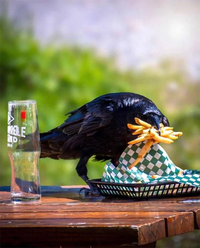 Bird - RELE NG