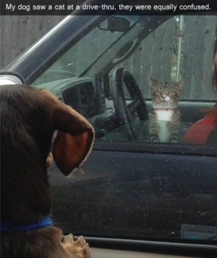 Vehicle door - My dog saw a cat at a drive-thru, they were equally confused.