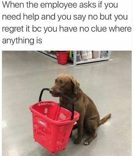 Dog - When the employee asks if you need help and you say no but you regret it bc you have no clue where anything is adabmorms