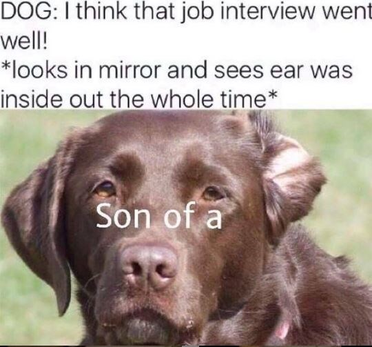 Dog - DOG: I think that job interview went well! *looks in mirror and sees ear was inside out the whole time* Son of a
