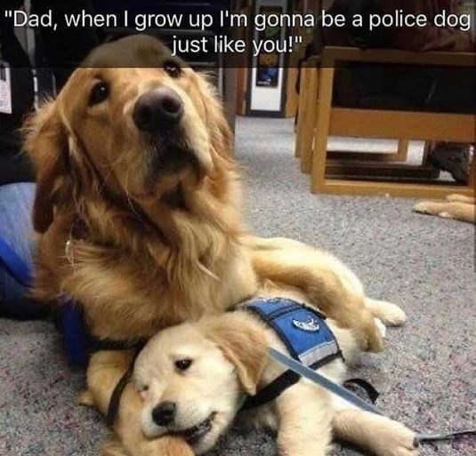 "Dog - ""Dad, when I grow up I'm gonna be a police dog just like you!"""