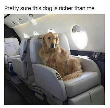 Dog - Pretty sure this dog is richer than me