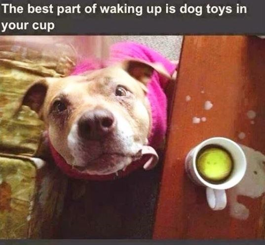 Dog - The best part of waking up is dog toys in your cup