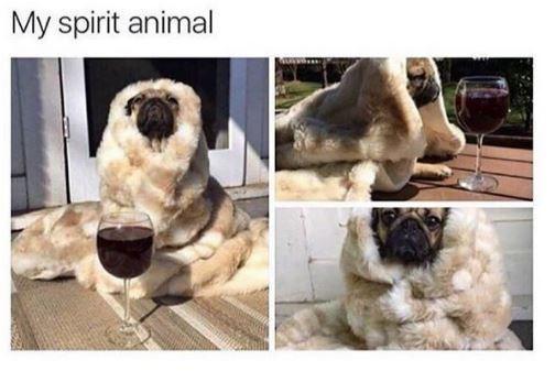 Dog - My spirit animal