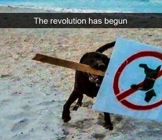 Sign - The revolution has begun