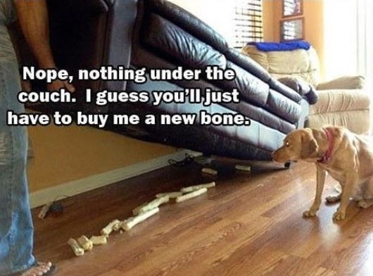 Laminate flooring - Nope, nothing under the couch. I guess you'lljust have to buy me a new bone.