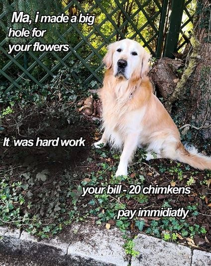 Dog - Ma, imade a big hole for your flowers It was hard work your bill 20 chimkens pay immidiatly