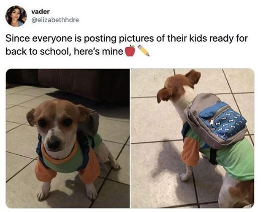 Dog breed - vader @elizabethhdre Since everyone is posting pictures of their kids ready for back to school, here's mine