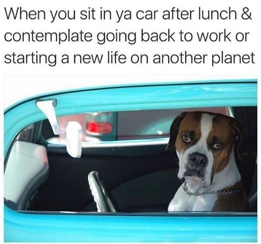 Vehicle door - When you sit in ya car after lunch & contemplate going back to work or starting a new life on another planet