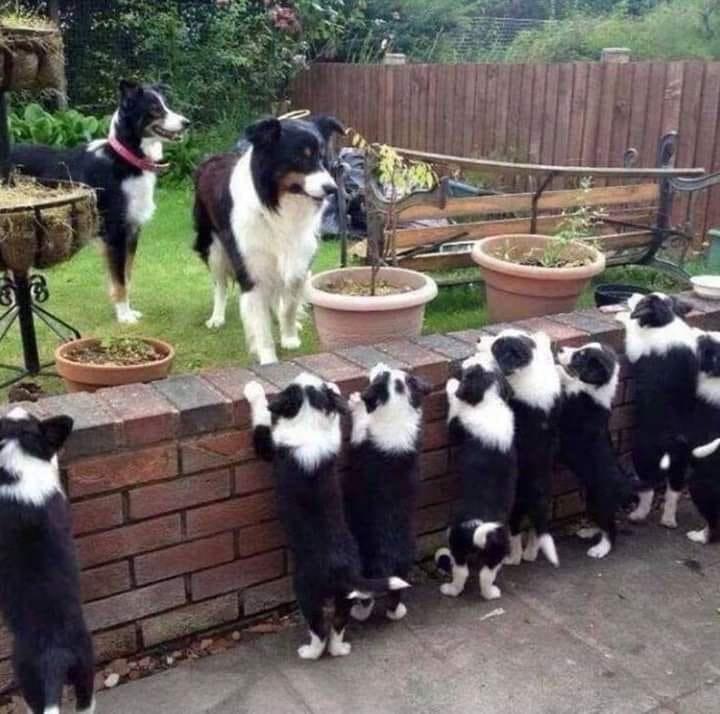 dog photos - 9351081984