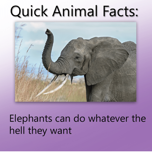 Elephant - Quick Animal Facts: Elephants can do whatever the hell they want