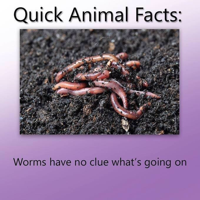 Soil - Quick Animal Facts: Worms have no clue what's going on