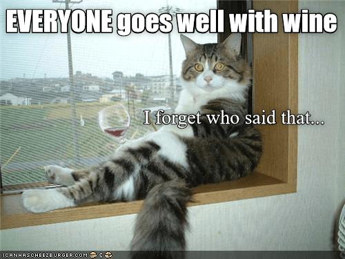 cat memes - 9351184384