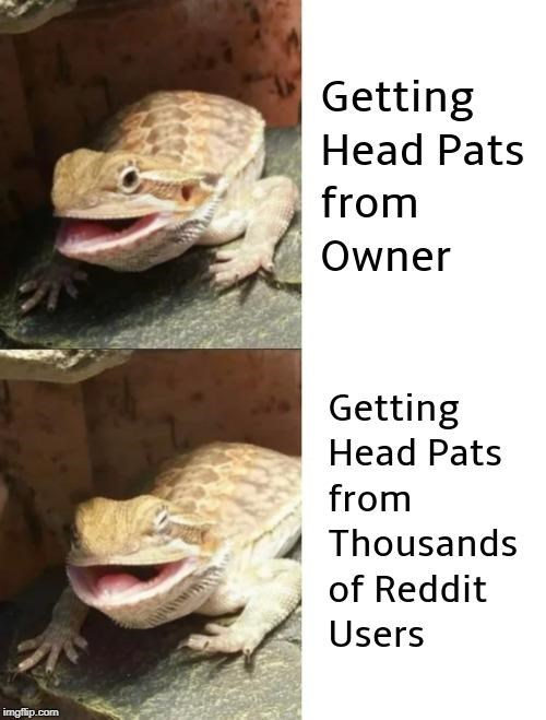 Reptile - Getting Head Pats from Owner Getting Head Pats from Thousands of Reddit Users imgfip.com