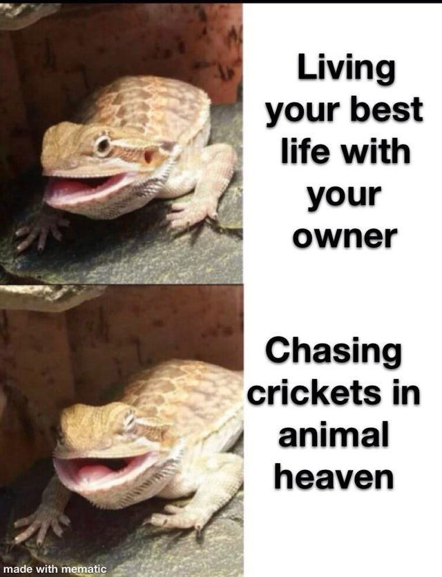 Reptile - Living your best life with your Owner Chasing crickets in animal heaven made with mematic