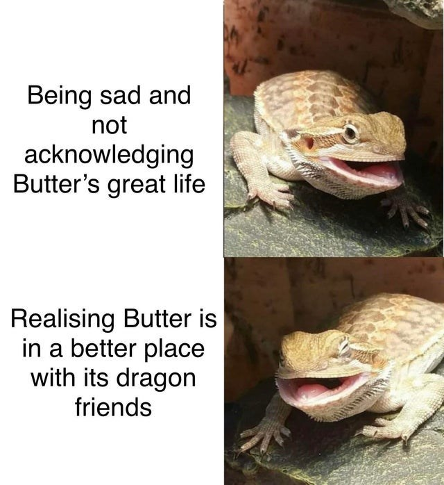 Adaptation - Being sad and not acknowledging Butter's great life Realising Butter is in a better place with its dragon friends