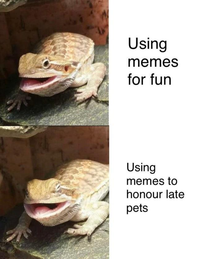 Reptile - Using memes for fun Using memes to honour late pets