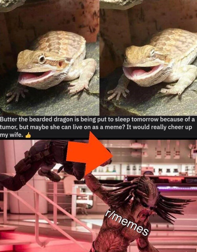 Lizard - Butter the bearded dragon is being put to sleep tomorrow because of a tumor, but maybe she can live on as a meme? It would really cheer up my wife. r/memes